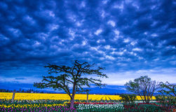 Galen himmel över lantgården Arkivfoto