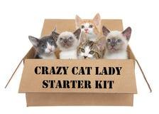 Galen sats för kattdamstartknapp royaltyfri fotografi