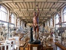 Galerie d'Anatomie comparée et de Paléontologie Royalty Free Stock Images