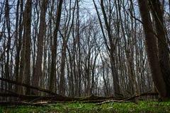 Galerie d'arbres Photos libres de droits