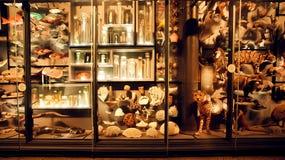 Galerij van een natuurlijke evolutie met vissen en dieren in showcase Stock Foto