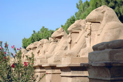 Galery of Sphinx. They were the guards of entrance to the palace in Luxor Royalty Free Stock Photo