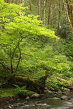 Gales Creek Royalty Free Stock Images