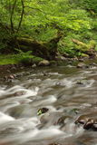Gales Creek Stock Photography
