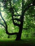 Galet kallt träd Arkivfoto