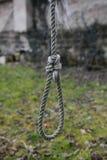 Galge på ett träd i trädgården Royaltyfri Foto