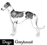 Galgo del estilo del bosquejo del perro Fotos de archivo libres de regalías