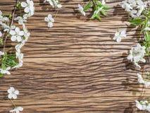 Galho de florescência da cereja sobre a madeira velha Imagem de Stock