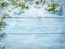 Galho de florescência da cereja sobre a madeira velha Imagens de Stock Royalty Free