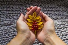 Galho do outono da cinza de montanha em suas mãos no tapete morno macio Imagem de Stock Royalty Free