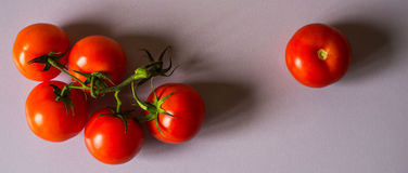 Galho dos tomates no tela panorâmico branco do fundo Imagens de Stock Royalty Free