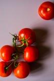 Galho dos tomates no vertical branco do fundo Fotos de Stock