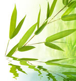 Galho e água de bambu foto de stock royalty free