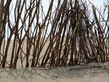 Galho na praia Fotos de Stock