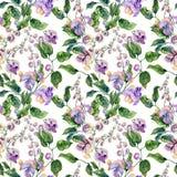 Galhos bonitos da videira do caracol com as flores roxas no fundo branco Teste padrão floral sem emenda Pintura da aguarela Pinta ilustração do vetor