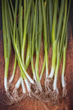 Galhos da cebola verde Foto de Stock Royalty Free