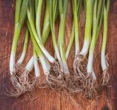 Galhos da cebola verde sobre Foto de Stock