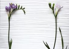 Galhos de flores frescas das frésias Imagens de Stock