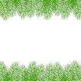 Galhos do abeto vermelho verde do Natal ilustração stock