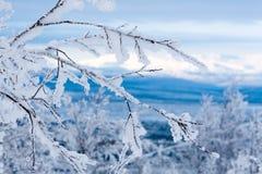 Galhos nevado. Montanhas e céu azul congelados no fundo Foto de Stock