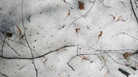 Galhos no assoalho da floresta A neve está derretendo A neve é melti fotografia de stock royalty free