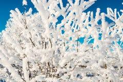 Galhos pequenos com neve Fotos de Stock Royalty Free