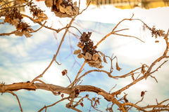Galhos secos do inverno imagens de stock royalty free
