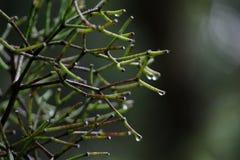 Galhos verdes e marrons com os ramos molhados pela chuva imagem de stock