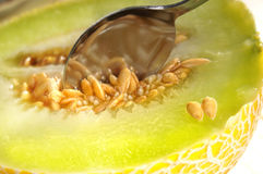 Galia melon Royalty Free Stock Photo