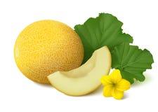 Galia melon on white background Royalty Free Stock Image