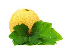 Galia melone Stock Image
