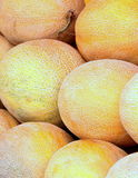 Galia melons Royalty Free Stock Photography