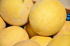 Galia Melons displayed on a market for sale Royalty Free Stock Photo