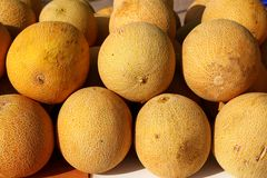 Galia yellow melon Cucumis Melo Reticulatus Stock Photography