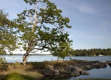 Galiano Island, Brotish Columbia, Canada Stock Images