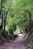 Galicia forest Stock Images