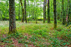Galicia Forest Royalty Free Stock Photo
