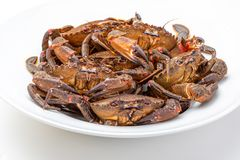 Galician Necoras from Galicia. Delicious seafood from the Bay of Biscay and Atlantic. Fresh and alive crabs isolated on white background stock photography