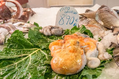 Galician octopus in the market Royalty Free Stock Photos