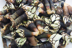 Galician seafood Stock Image
