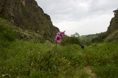 Galiläa im Frühjahr lizenzfreies stockfoto