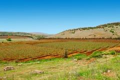 Galilee Stock Photo