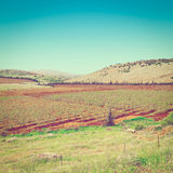 Galilee Royalty Free Stock Images