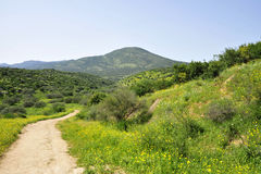 Galilee landscape. Stock Images