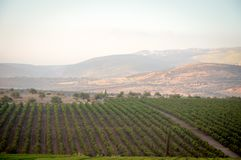 View of the Golan Heights in the summer . Royalty Free Stock Images
