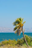 Galilee Sea Stock Photos