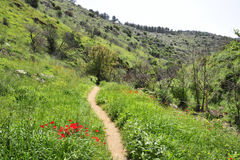 Galilee spring landscape. Royalty Free Stock Photos