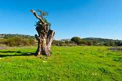 Galilee Royalty Free Stock Photo