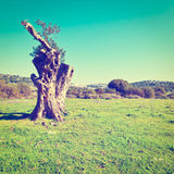 Galilee Royalty Free Stock Photography
