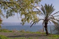 Galillee,以色列海在古老Capernaum附近的 圣经的圣伯多禄的家 库存图片
